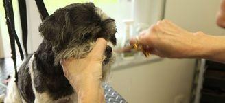 Hondenkapsalon Annick - Hoboken - TRIMSALON