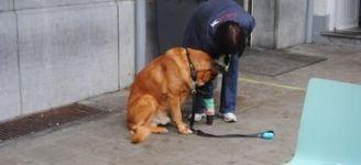 Hondenkapsalon Annick - Hoboken - CURSUS POSITIEVE GEDRAGSTRAING HONDEN