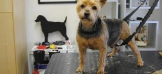 Hondenkapsalon Annick - Hoboken - FOTO'S HONDEN