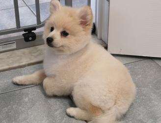 Trimsalon Annick  - Puppygewenning