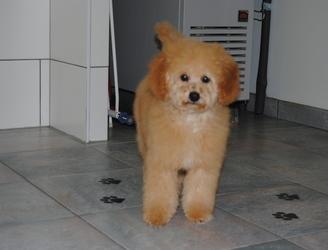 Trimsalon Annick  - puppy gewening